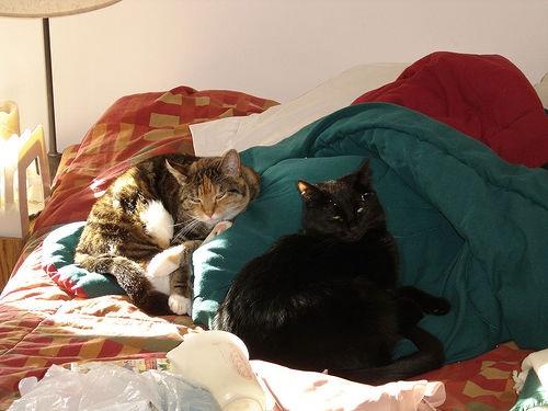 tillie-cliche-on-guest-bed.jpg