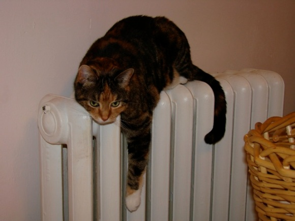 tillie-radiator.jpg