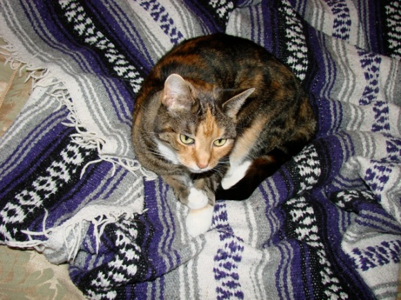 tillie-purple-blanket.jpg